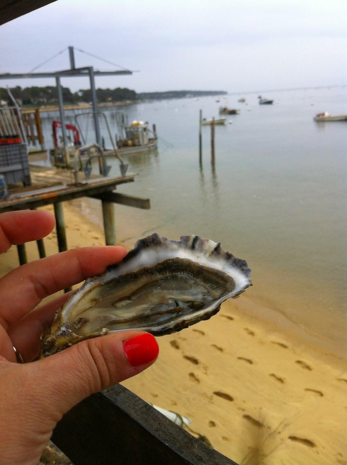 lège cap ferret dégustation d'huîtres