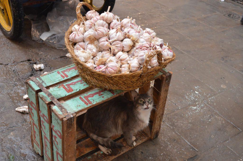 medina fes maroc blog voyage camille in bordeaux air arabia