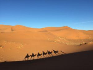trekking dromadaires désert Sahara