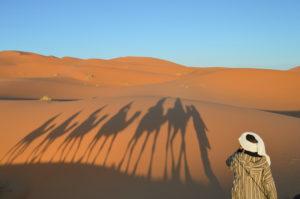 trekking dromadaires sahara désert