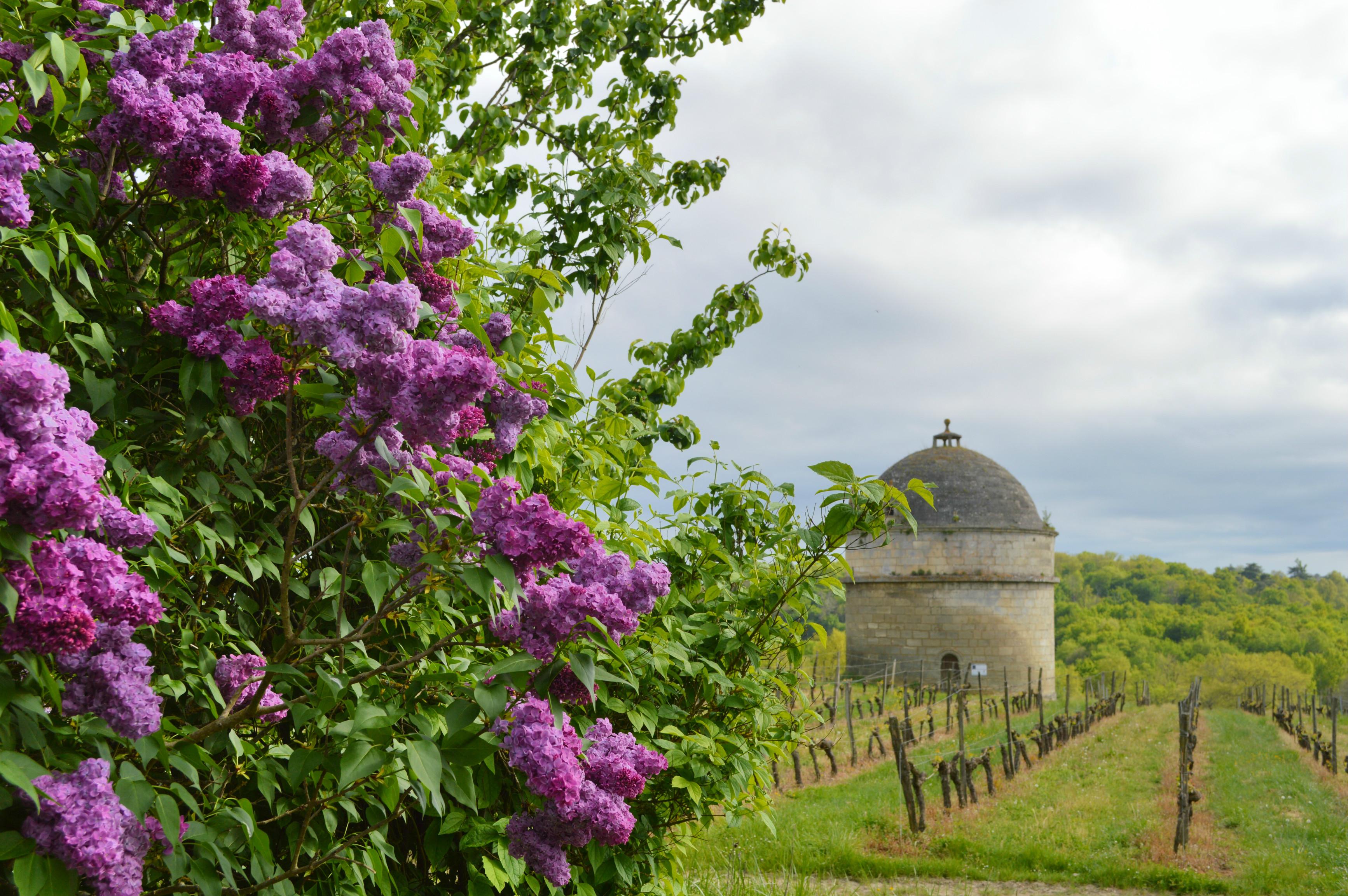 réservation séjour vignoble Winefing Château de Camarsac