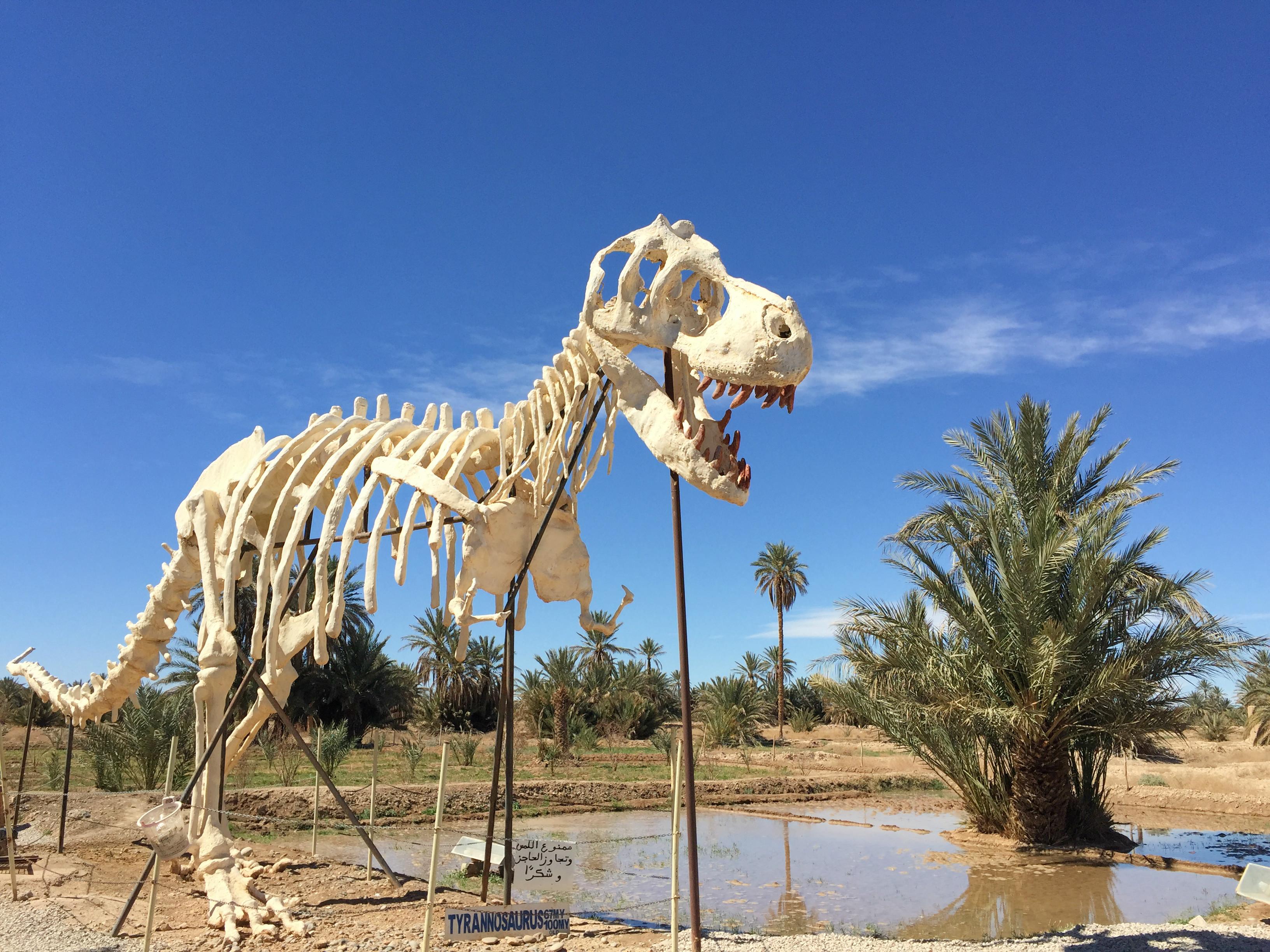 musée tahiri des fossiles et dinosaures Maroc
