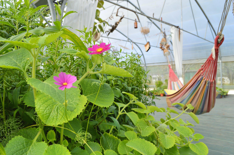 l'autre campagne ferme plantes hydroponie aquaponie - blog Camille in Bordeaux
