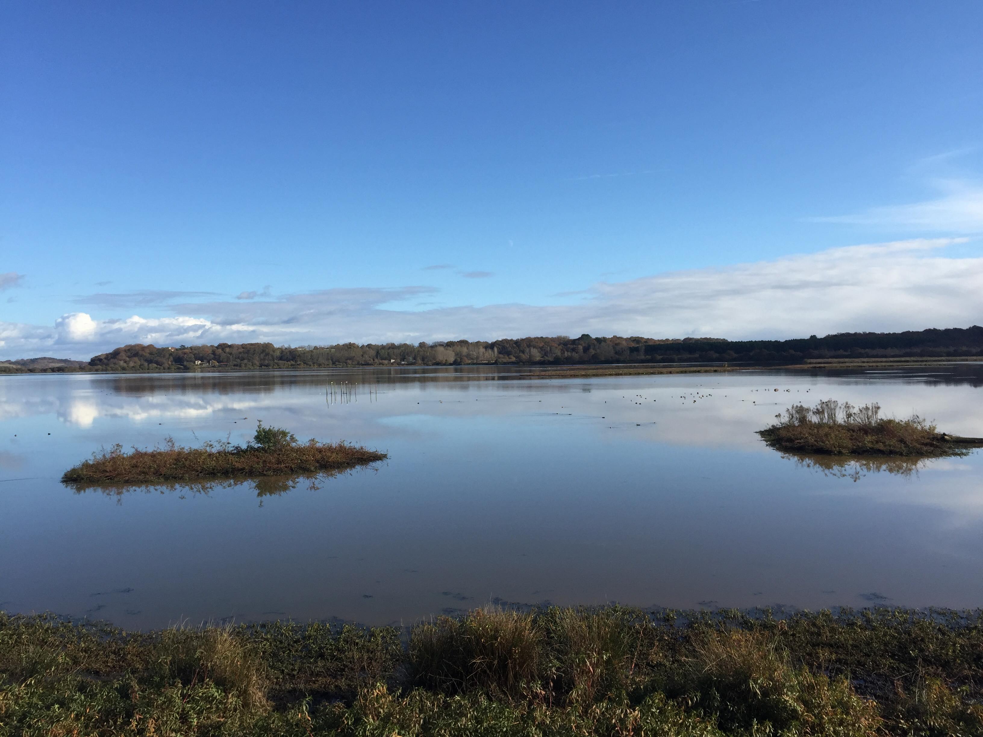 réserve naturelle Marais d'Orx Landes - blog Camille In Bordeaux