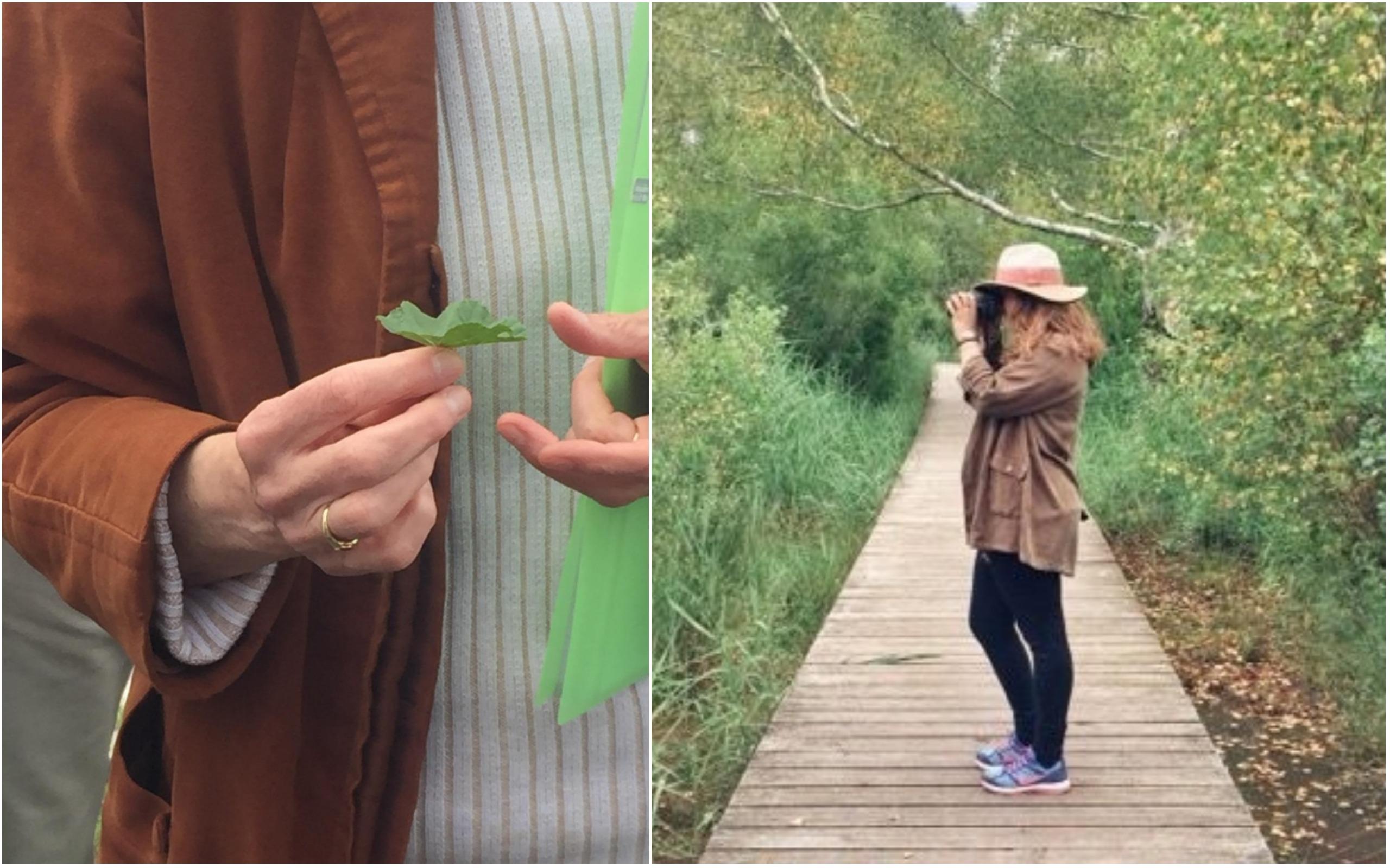 découverte plantes sauvages Gironde