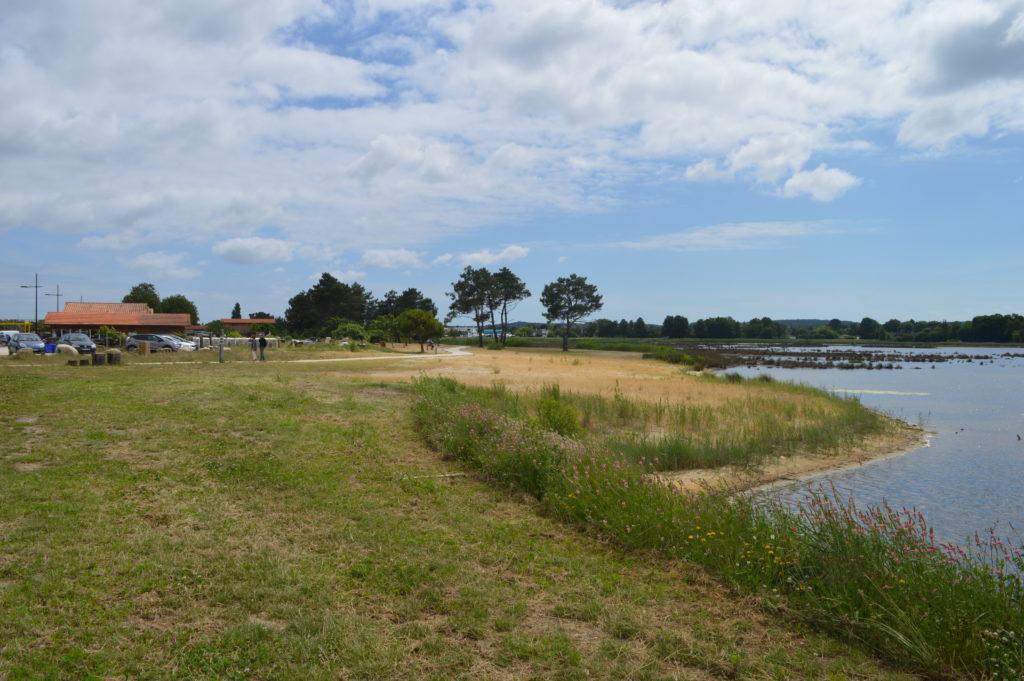 prés salés Gironde découverte plantes sauvages