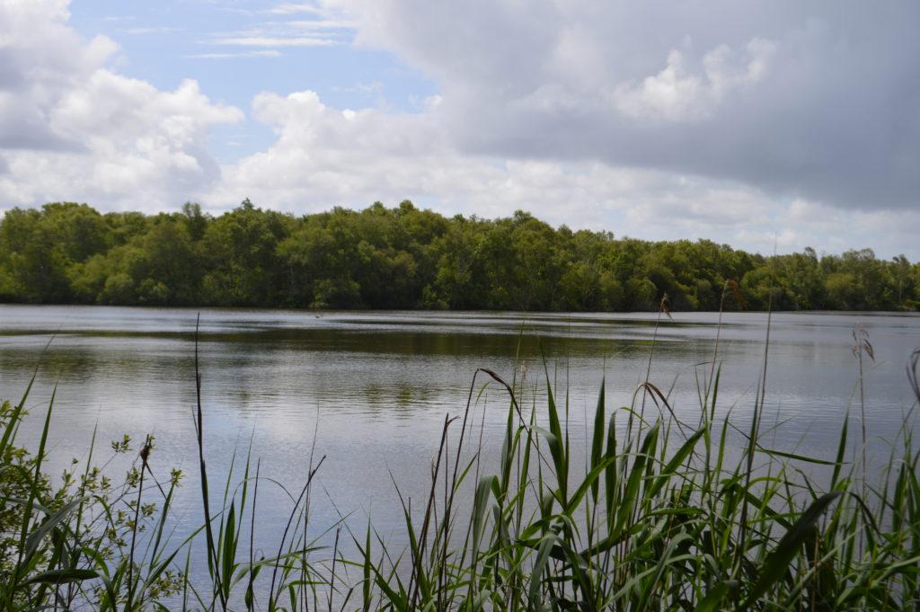 balade lagune de Contaut Hourtin