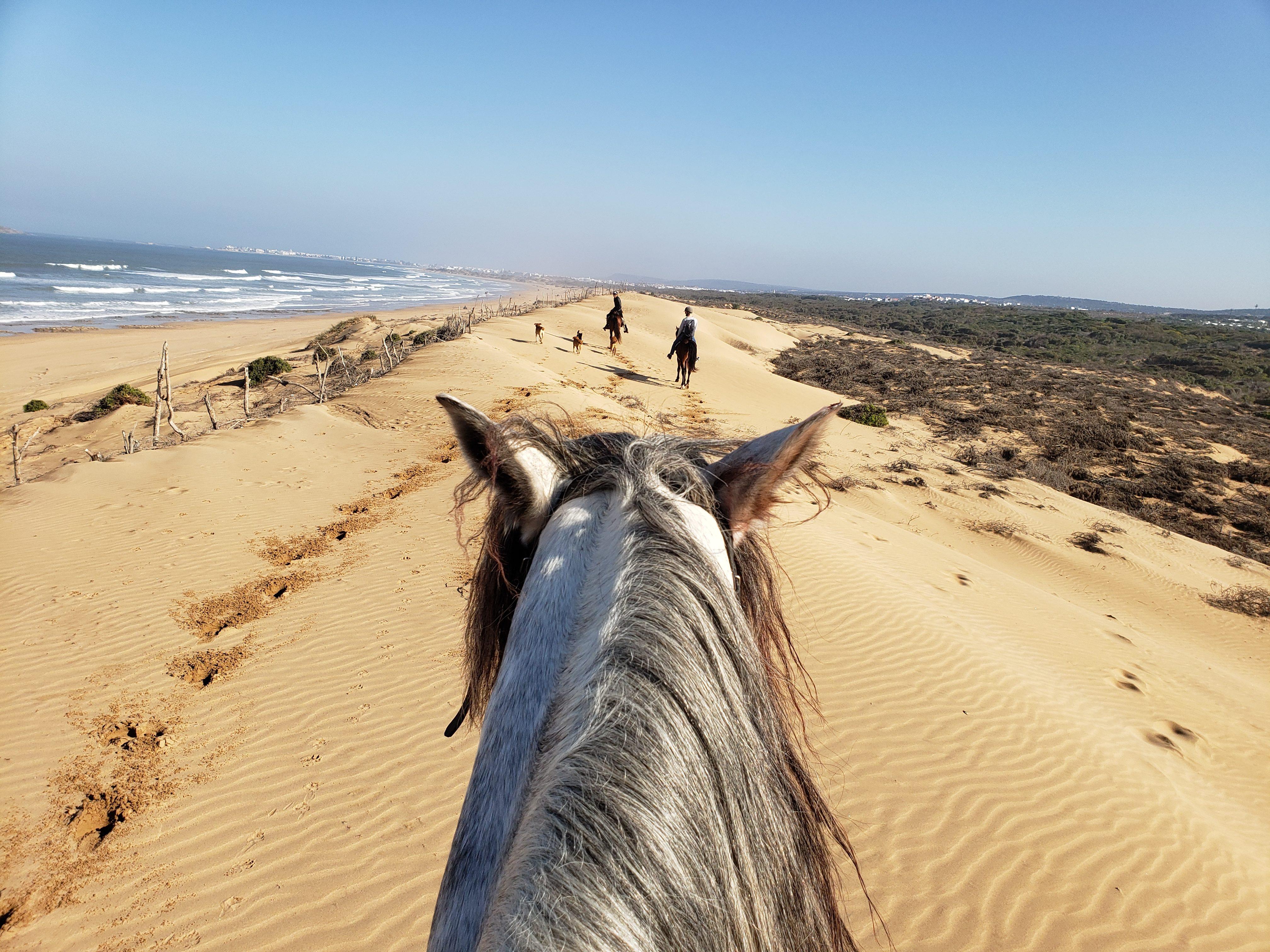 Essaouira randonnée cheval
