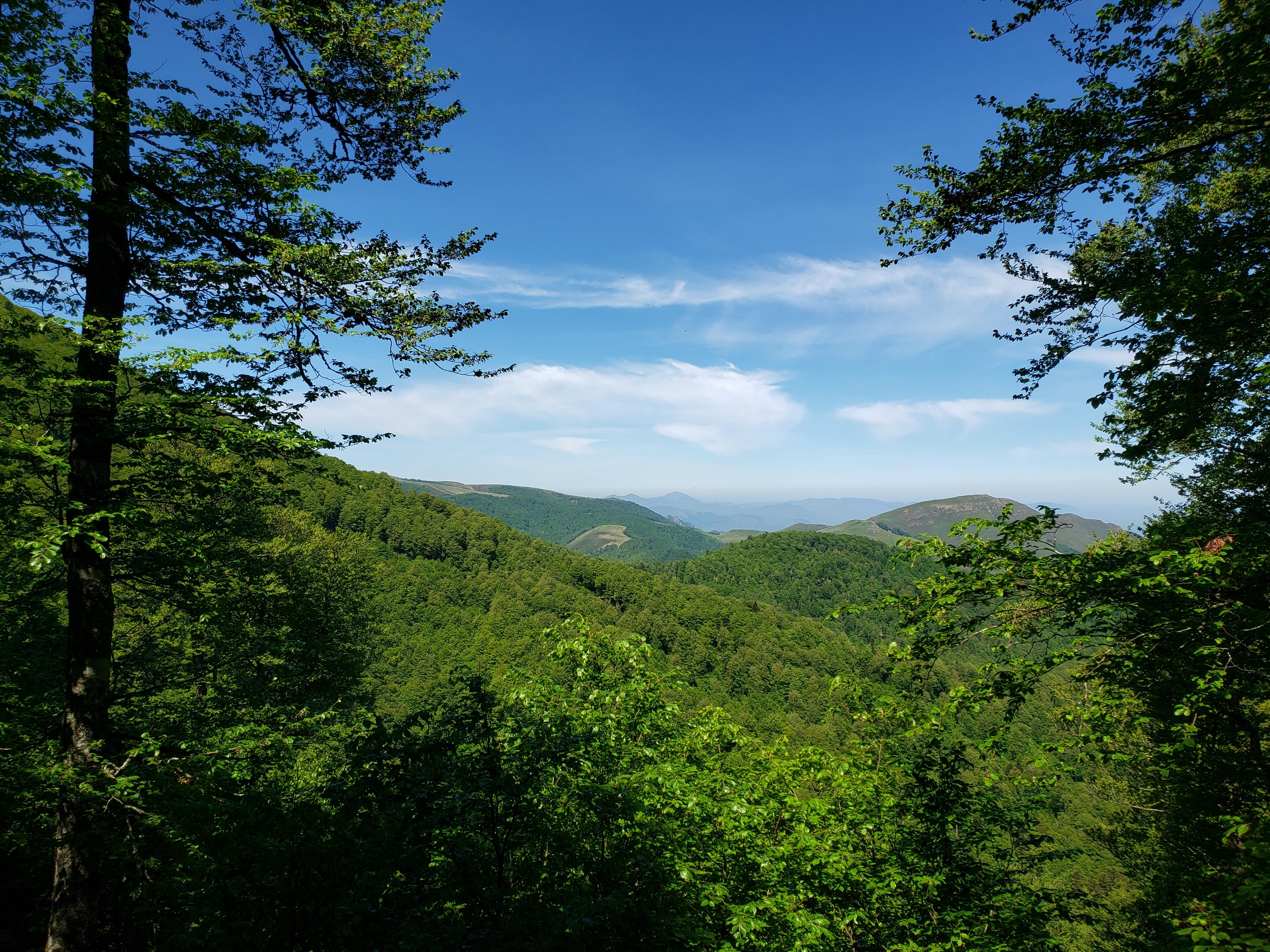 randonnée forêt Iraty