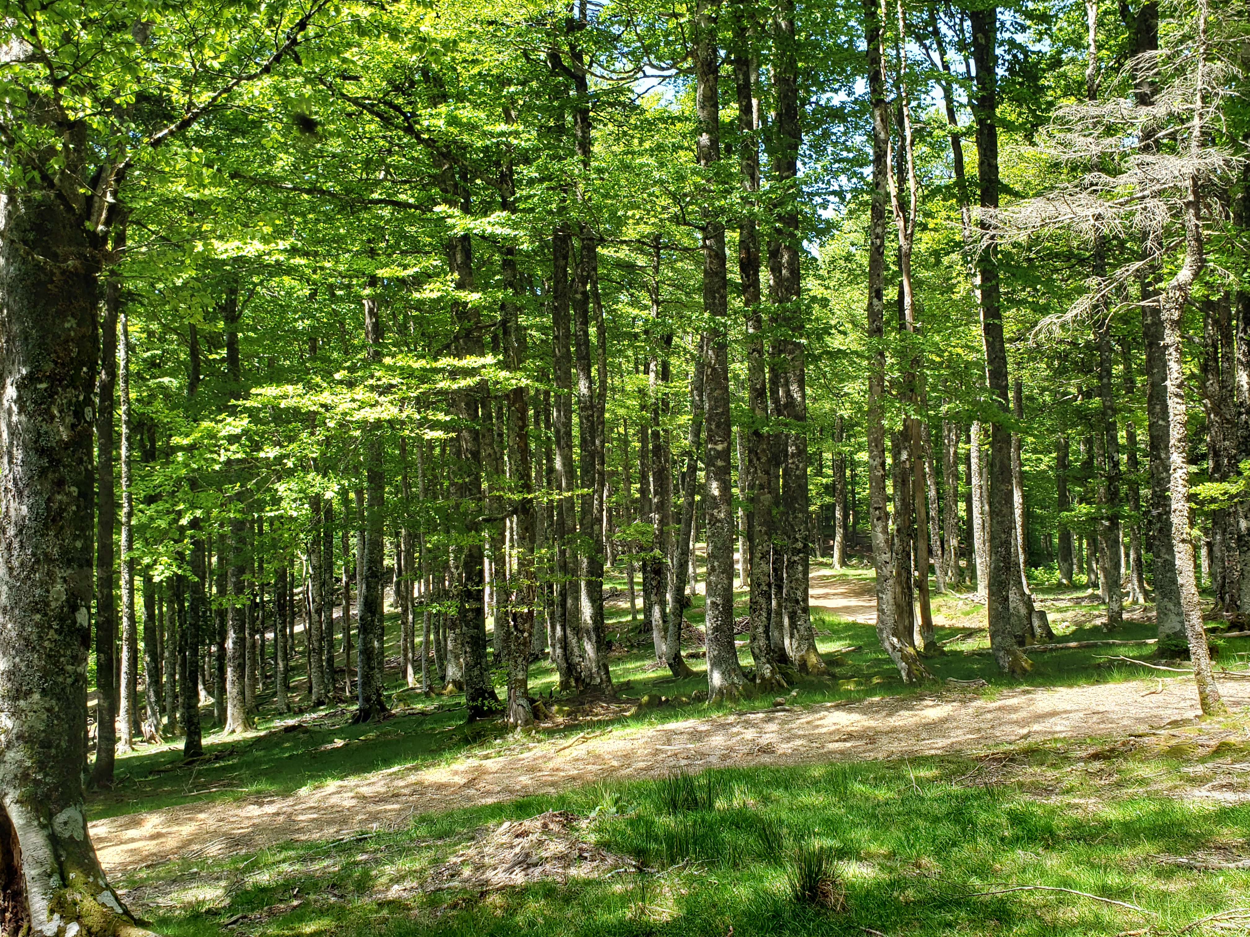 randonnée Pays Basque forêt Iraty