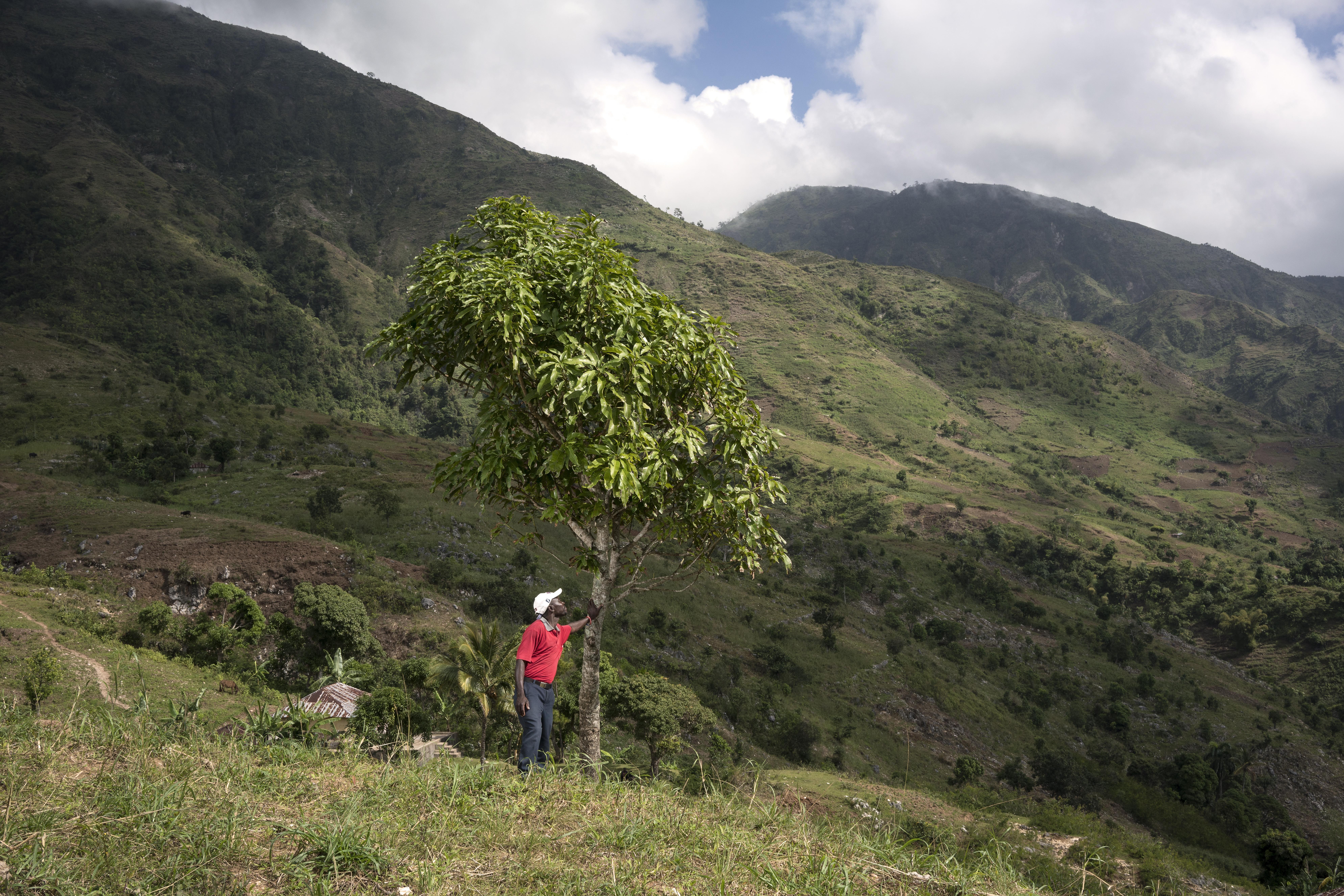 PLANTATION ARBRE TREEDOM